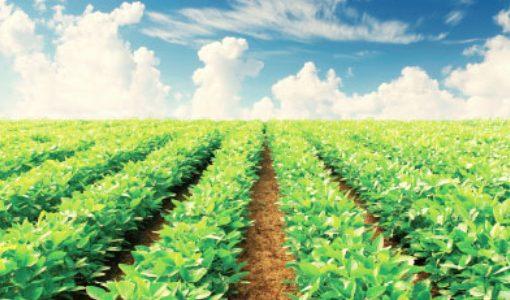 衛星画像を農業に応用、世界中の農地で生育状況を一手に把握する珈和科技のリモートセンシング技術