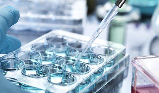美容や若返りでも注目の幹細胞治療、 研究開発には厳格な管理がマスト