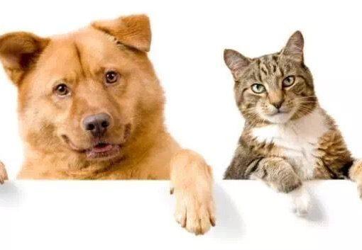 犬や猫が「家族化」、出費惜しまぬ傾向も=ペット市場のチャンス(一)
