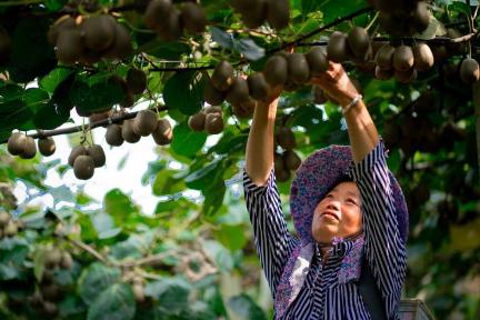 タオバオ、農家をサポートするための基金を設立、農産物の販路開拓で10施策