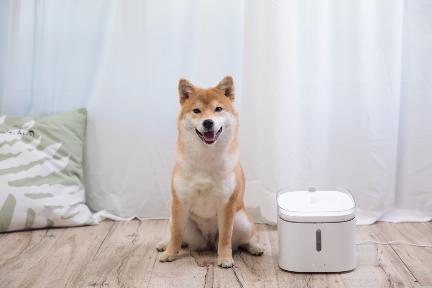 ペット用品のスマート化進む、猫や犬向けの自動給水器が人気