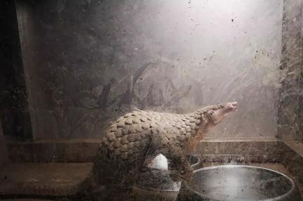武漢市、野生動物の食用を全面的に禁止
