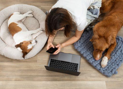 ペット専門獣医師向けのオンライン教育プラットフォームに熱視線 地方の人材不足解消を目指す