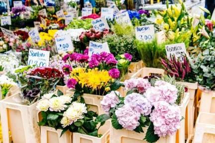 園芸を楽しむオンラインコミュニティ「花信」 ソーシャルコマースで植物の販売も