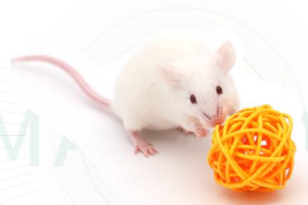 医療実験用マウス作製のバイオテックベンチャー、約61億円を調達