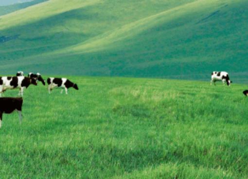 乳牛100万頭に「クラウドドクター」が対応 乳製品大手「蒙牛」がアリババと提携